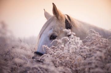 portret konia w szronie
