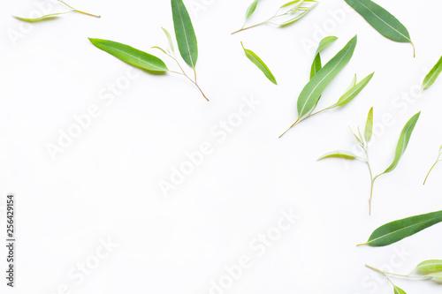 Fotografie, Obraz  Eucalyptus essential oil bottle with  leaves on white.