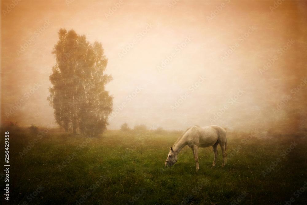 wolny koń na łące