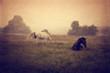 konie pasące się na łące wypoczywające