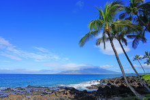View Of Palm Trees And Black L...