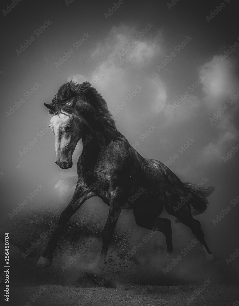 Fototapety, obrazy: Young stallion in a dramatic shot