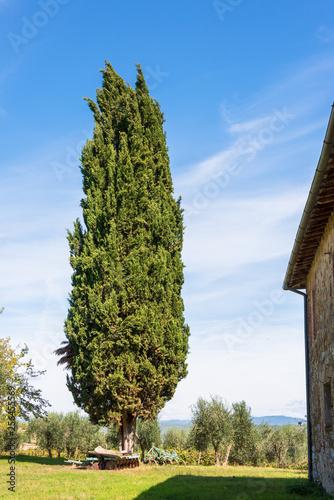 Foto  Auf dem Gelände eines verlassenen Bauernhofes in der Toskana mit altem Baumbesta
