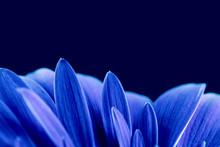 The Blue Petals