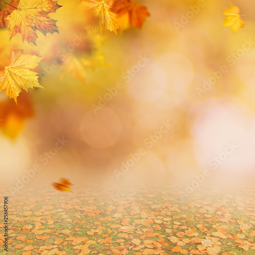 Stickers pour portes Orange eclat Autumnal fall. Beautiful seasonal backgrounds with maple leaf and bright colours