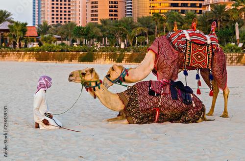 Valokuva  Camel rider on beach on Dubai Marina middle eastern guys