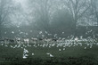 Deer and seagulls in a park in fog, Surrey, England, UK