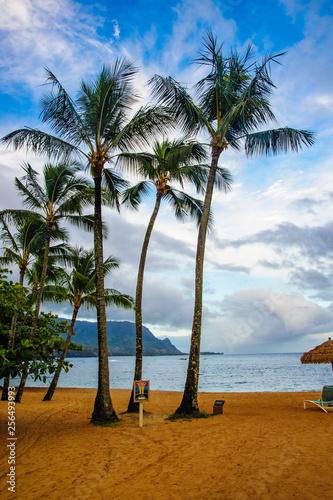 Beautiful Tropical photos tall palms