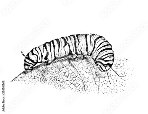 Fotografía  Caterpillar Drawing, Pen and ink Illustration, Caterpillar Art, Hand Drawn Artwo