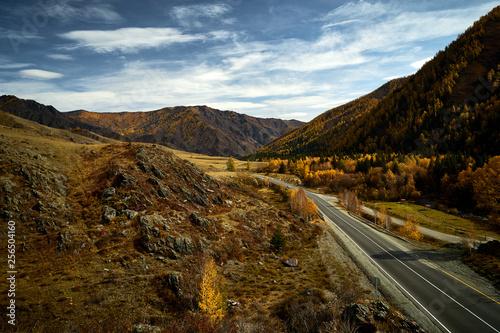Fotografia  Asphalt road to the mountains of Altai passing through the autumn landscape