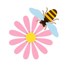 Pink Field Flower With Bee Top View Flat Isolated