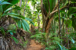 canvas print picture - Footpath in tropical rainforest. The Vallee De Mai palm forest ( May Valley),  island of Praslin, Seychelles.