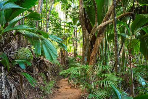 Obraz Footpath in tropical rainforest. The Vallee De Mai palm forest ( May Valley),  island of Praslin, Seychelles. - fototapety do salonu