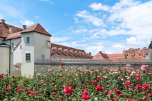 Old Buildings With Red-tiled Roofs Against The Background Of Blooming Roses.
