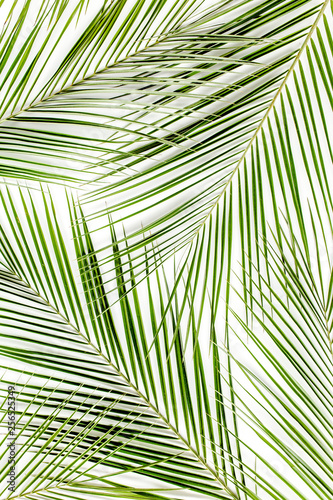 Tropical green palm leaves on white background. Flat lay, top view Wall mural