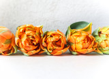 Row of beautiful orange tulips on white backdrop. Perfect for background greeting card