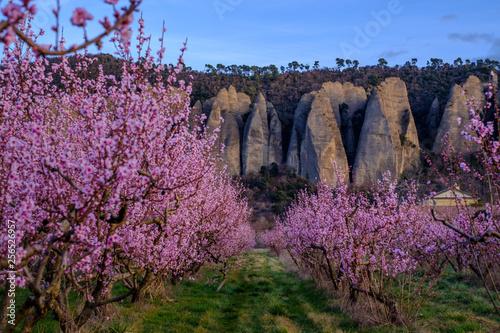 Photo Arbres de pêche en fleurs, vue sur les rochers du village Les Mées, nommées pénitents