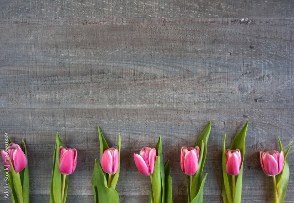 Fototapety, obrazy: Różowe tulipany na szarym tle