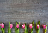 Fototapeta Tulips - Różowe tulipany na szarym tle