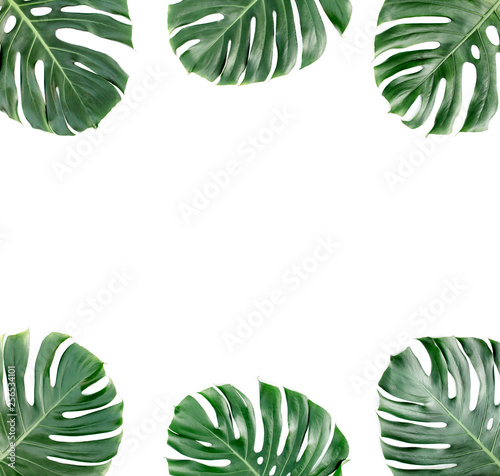 Photo Stands Asia Country Frame from tropical green leaves Monstera on white background. Flat lay, top view