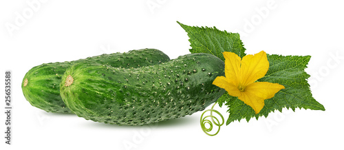 Fototapeta Cucumber with flower isolated on a white background obraz