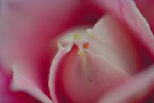 Kwiat Blåmster Flower Macro Makro Mikro Micro Hydrangea Hortensja