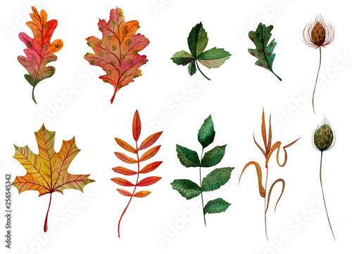 Fotografie, Obraz Watercolor elements set autumn leaves oak ashberry maple rosehip chestnut blade