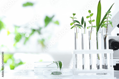 Fotografia  Laboratory glassware with different plants on table against blurred background, space for text