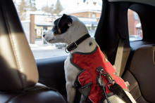 Dog In Car Wearing Dog Seat Be...
