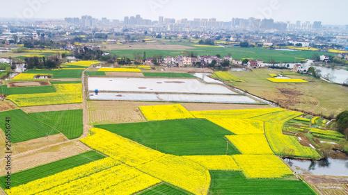 Poster Jaune Aerial photo of rural spring scenery