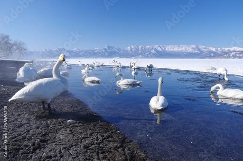 Foto op Canvas Zwaan Lake Kussharo in Hokkaido, Japan 北海道屈斜路湖