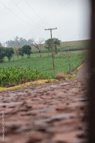 Fotografie, Obraz  estrada 6