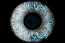 Human Blue Eye Iris. Pupil In Macro On Black Background