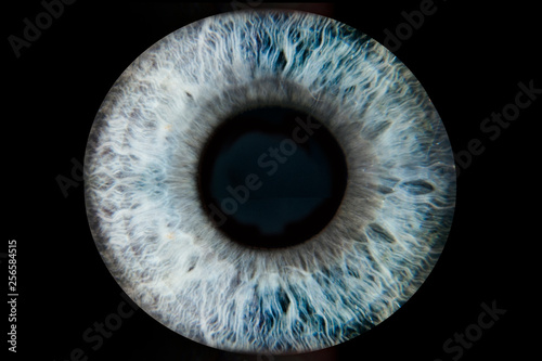 Foto op Plexiglas Iris Human blue eye iris. Pupil in macro on black background