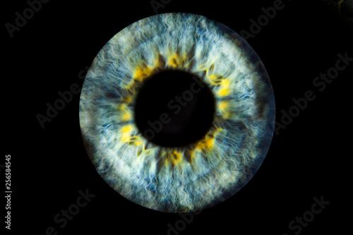 Deurstickers Iris Human blue eye iris. Pupil in macro on black background