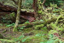 The Largest Of Trees Become Mulch On The Forest Floor Providing A Place For The Smallest Forest Plants And Animals To Live.