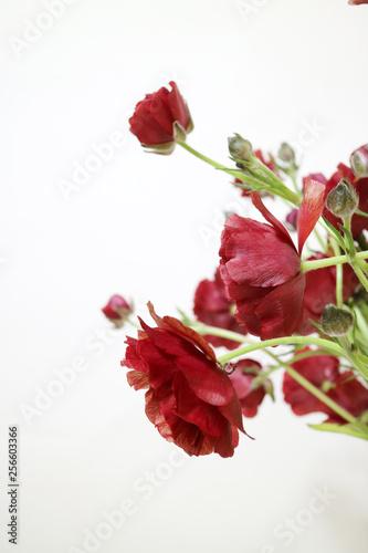 Fototapety, obrazy: 아름다운 봄 꽃들, 활짝핀 아름다운 꽃 ,꽃 오브젝트