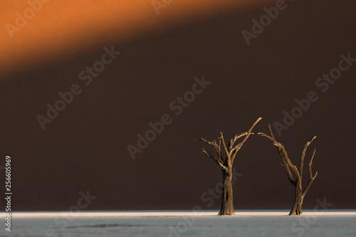 deadvlei-drzewo-w-ostatnim-swietle-sossusvlei-namibia