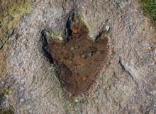The Footprint Of Dinosaur On A...