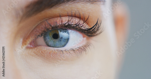 Obraz Macro close up of beautiful female blue eye with perfect natural makeup looking  in camera. - fototapety do salonu