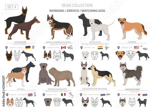Photographie  Working, service and watching dogs collection isolated on white