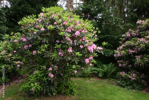 Cadres-photo bureau Jardin rhododendron