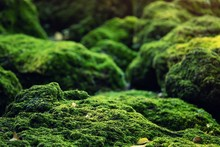 Beautiful Bright Green Moss Gr...