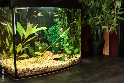 Fotografie, Tablou Beautiful aquarium on table in room