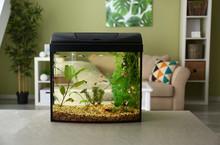 Beautiful Aquarium On Table In Room