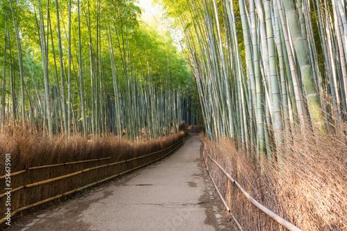 In de dag Zwart Bamboo forest of Arashiyama at Kyoto, Japan
