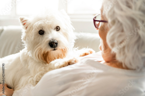 Photographie The Therapy pet on couch next to elderly person in retirement rest home for seni