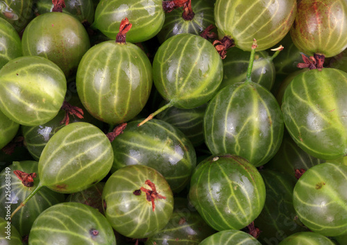 Fotografía  many green gooseberry fruit