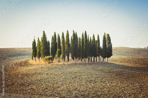 Foto  Cypress garden on a hill among empty rolling fileds in Tuscany