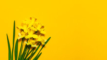 Spring Floral Background. Yell...